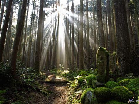 kumano kodo unique japan tours