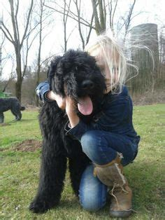 childrens haircuts in halifax atlas bouvier des flandres 6 y o halifax waterfront