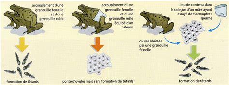 livre spallanzani digestion reproduction les exp 233 riences folles de