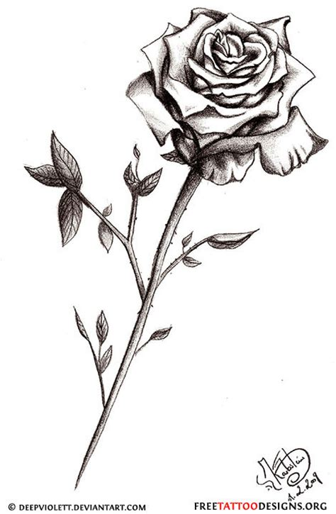 dark rose tattoo designs kaji small black