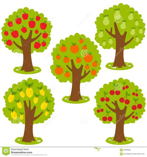 set tree fruit trees stock vector image 56595062