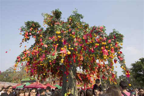 new year wishing tree tradition wishing for happiness at the lam tsuen wishing tree