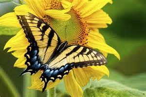 what colors attract butterflies flowers that attract butterflies and hummingbirds ehow