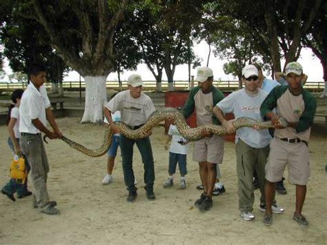 imagenes anacondas reales la anaconda venezuela tuya