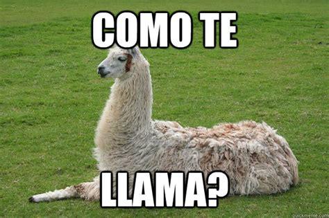 Funny Llama Memes - llama meme 28 images 25 best ideas about llama meme on