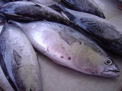Ikan Tuna Loin Fillet resep ikan salmon archives easy food recipeeasy food recipe