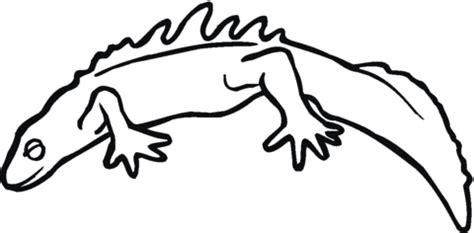 tiger salamander coloring page salamander 18 coloring page supercoloring com
