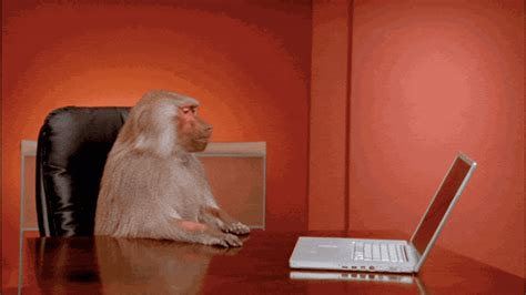 boardroom baboon office meme creators interview complex