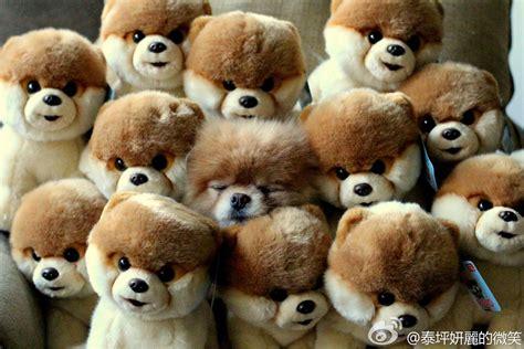 The Puppy Search 2 by 可爱动物搞笑动态图 家具