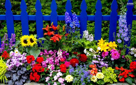 flower pictures flowers hq wallpapers and pictures