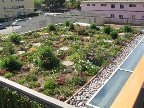 green roof green roofs bringing nature to your doorstep environmental topics