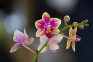 Cheap Yellow Flowers - orchids orchidaceae family of flowers and plants