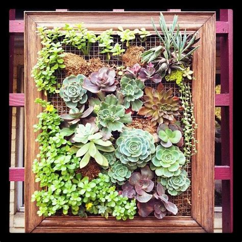 Succulent Frame My Farmscape - succulent frame get in my yard