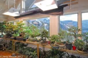 plants that grow in rooms mpbf journal 2 the basics of indoor bonsai feb 2013