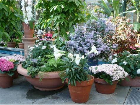 Plants For Planters by Flowers In Planters At Us Botanic Garden Jpg Hi Res 720p Hd