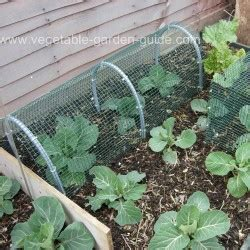 Garden Of Got Questions Vegetable Gardening Questions And Answers