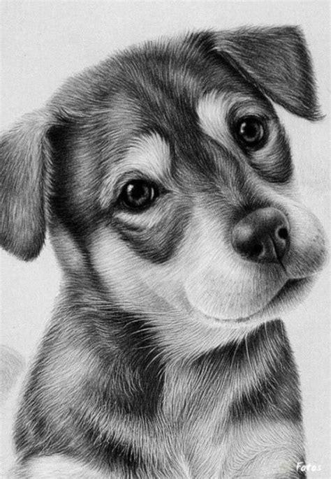 libro the guard dog im 225 genes de dibujos a l 225 piz de amor corazones rosas y animales im 225 genes totales