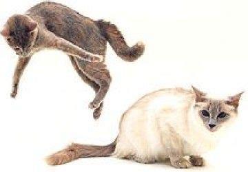 nieuwe kat in huis kattengedrag