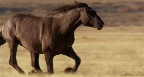 imagenes gif yegua gifs animados de caballos gifmania