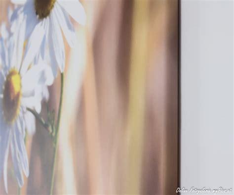 Foto Auf Leinwand Test by Fotoleinwand Druck Im Test Preisvergleich Testsieger