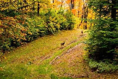 michigan fall colors steve q photo michigan fall color 2012 day 2 boyne