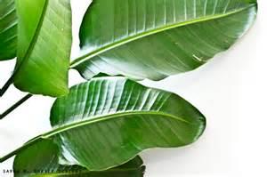 leaf poster banana wall art
