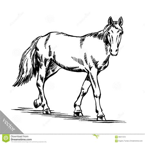 draw horse illustrator engrave ink draw horse illustration stock vector image