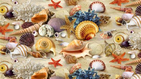 shell wallpaper seashell coral starfish sand wallpaper hd wallpaper