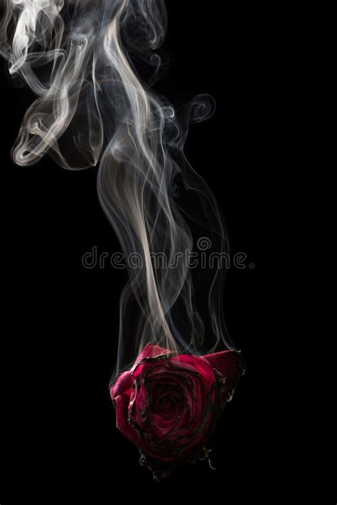 photo collection smoke rose red black
