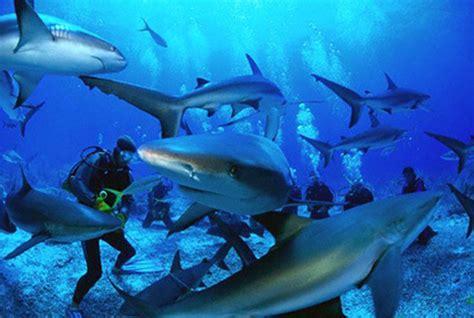 dive shark shark dive