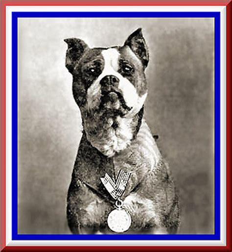 Sergeant Stubby Photos War Time Pit Bulls Stubbydog