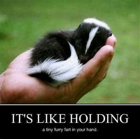 Skunk Meme - holding baby skunk animals pinterest babies haha