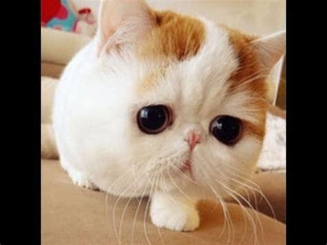 cat episodes cats cats 2014 cat baby tv
