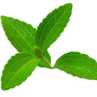 Bibit Stevia bibit bunga benih daun stevia manis lazada indonesia