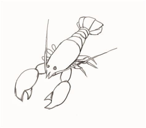 Drawing Of A by How To Draw A Lobster Step By Step