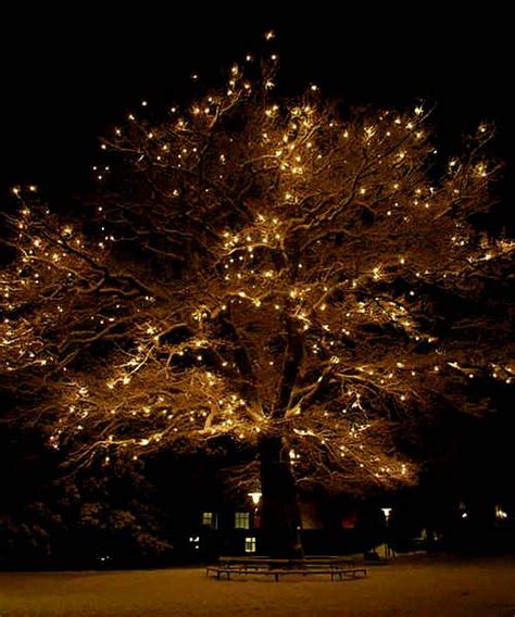 25 best lights in trees ideas on pinterest backyards
