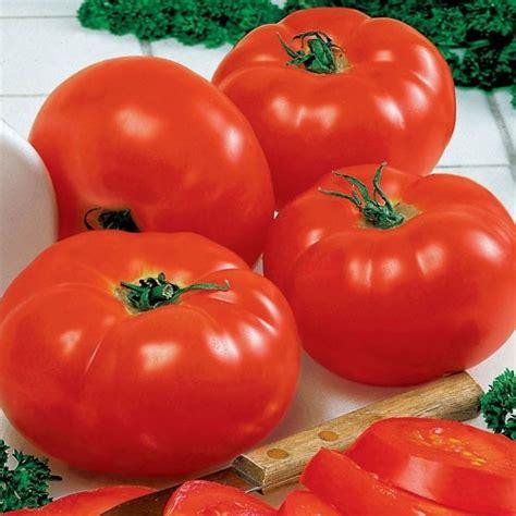 Big Hybrid Tomato 10 Benih tomato big beef hybrid all america selections