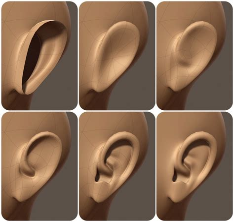 zbrush tutorial ear 81 best images about modeling reference organic on