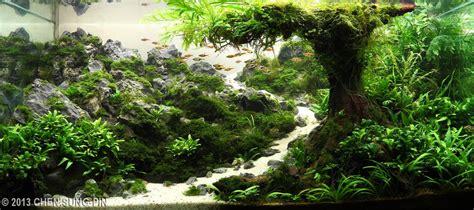aga aquascape 2013 aga aquascaping contest 339