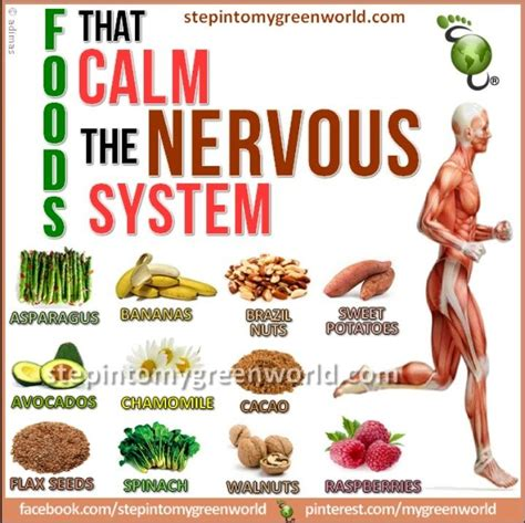 chronically positive my s 5 step system to staying positive books foods that heal nervous system foods to calm the nervous