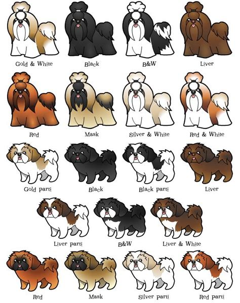 shih tzu colors pictures free coloring pages of grey colour shades