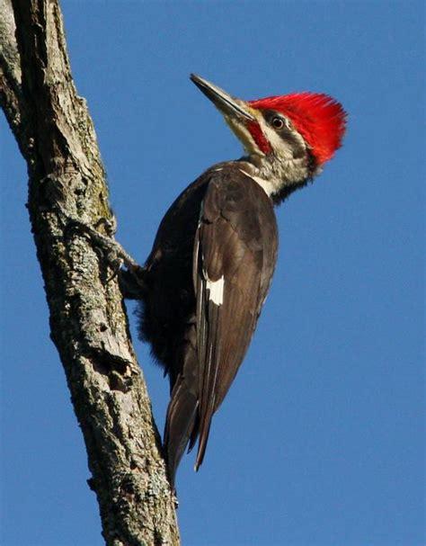 kingfishers and woodpeckers