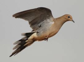 down south adventures central texas and south texas dove