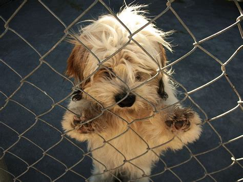 local shelters with puppies adoptable dogs in your local shelter shelters pets and dogs pets world