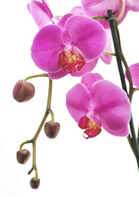 care of orchids after flowering your orchid care guide from lifestyle home garden