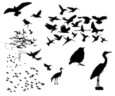 Vitamin B Komplek Untuk Burung tips merpati balap dasar sprint