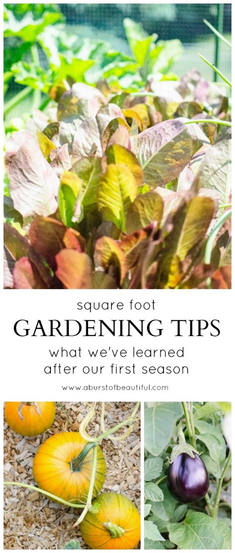 gardening tips square foot gardening tips what we ve learned after the