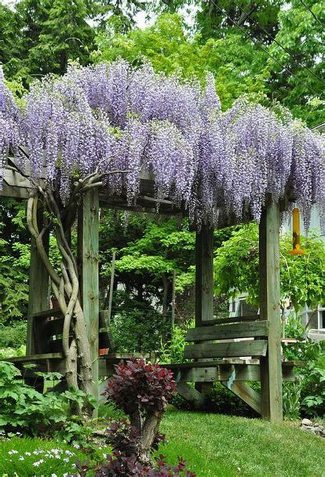 garden bench arbour 25 best ideas about wisteria arbor on pinterest garden arbor arbors and wisteria