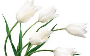 White Flower Images by White Flower Weneedfun