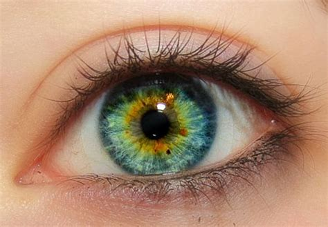 green eye color blue blue greenish pencil and in color